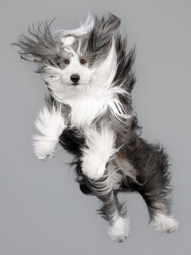 IT'S RAINING DOGS